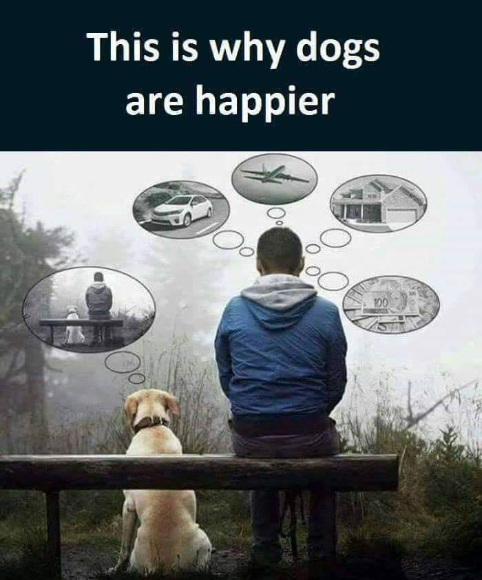 Dogs r happier_why